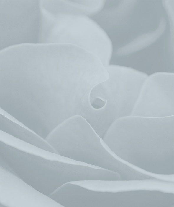 03-rosa-maritime-belforte