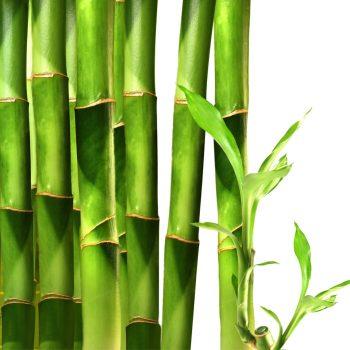 Bamboo Lime Cotone canapa Profumo Ambiente Verde