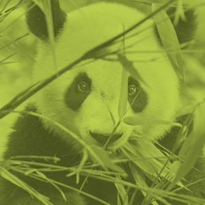 02-bamboo-lime-belforte