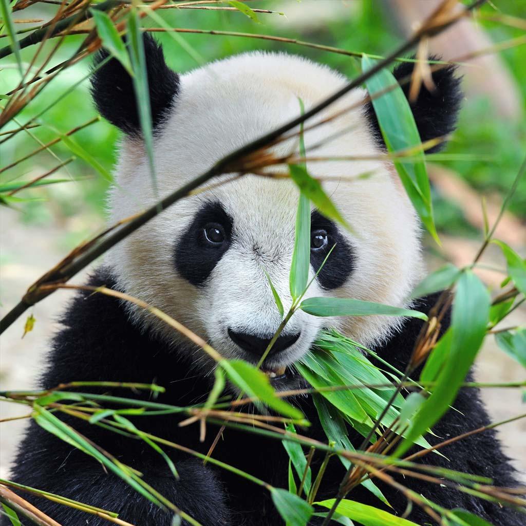 03-bamboo-lime-belforte