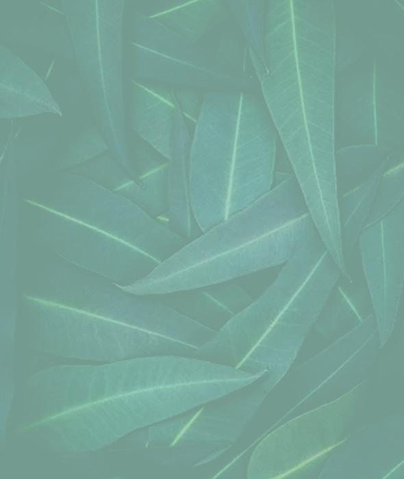 eucalyptus-img